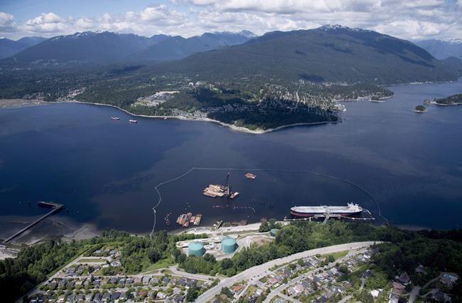 Trans Mountain: l'ONÉ exige un programme de protection pour les mammifères marins