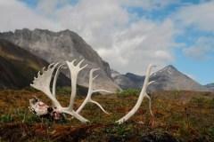 La protection de la faune décriée par des experts