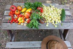 Montréal octroie 20 000$ pour l'agriculture urbaine