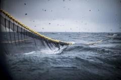 Des restes de poissons pour propulser des bateaux de croisière