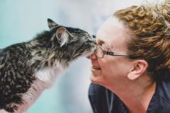 Un chat d'Halifax trouvé dans un colis à Montréal