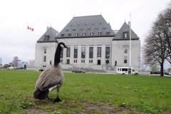 Aide à mourir: Ottawa pourra plaider à nouveau