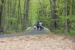 Plus de 6000 frênes à abattre au Bois-de-Saraguay