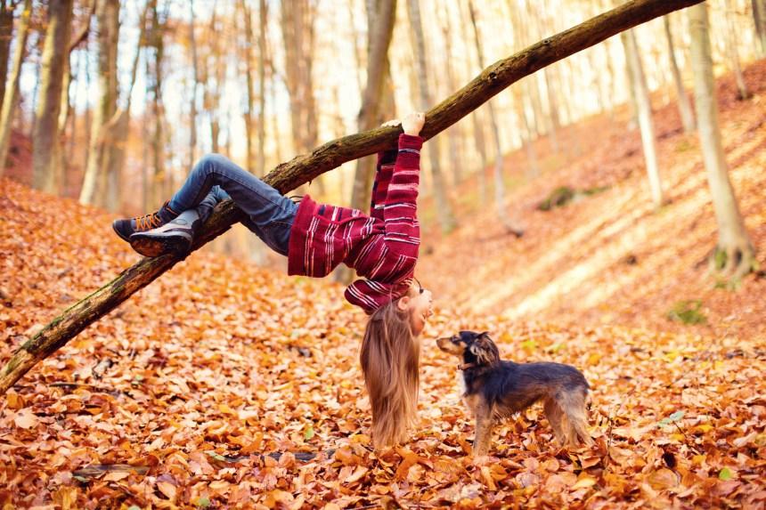 Comprendre le langage corporel des chiens permet de prévenir les attaques par morsure