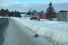 Des phoques égarés secourus à Terre-Neuve