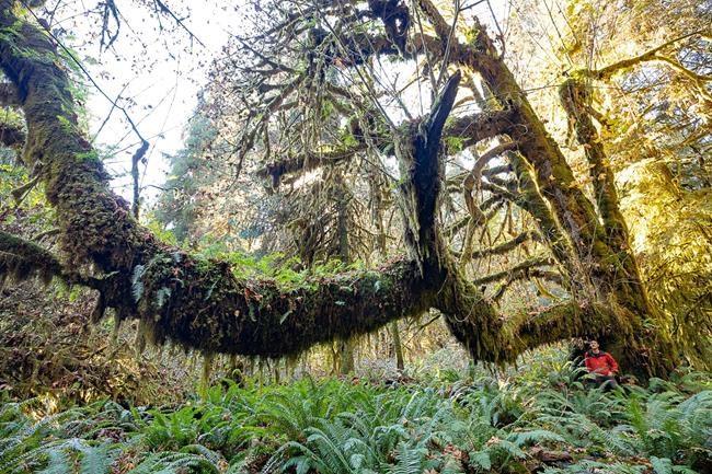Plaidoyer pour protéger les forêts anciennes en Colombie-Britannique
