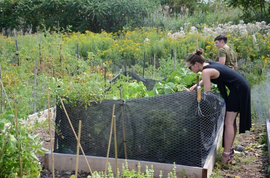 Les jardins communautaires de Rosemont repris en mains