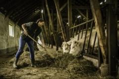 Renoncer à la viande peut sauver des millions de vies selon le Forum économique mondial