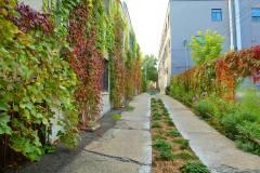 Les ruelles vertes seront préservées dans Rosemont–La Petite-Patrie