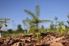 Des espèces végétales ont disparu du Mont St-Hilaire au cours des dernières décennies