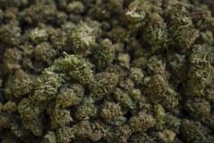 Des vétérinaires veulent pouvoir donner du cannabis médicinal aux animaux