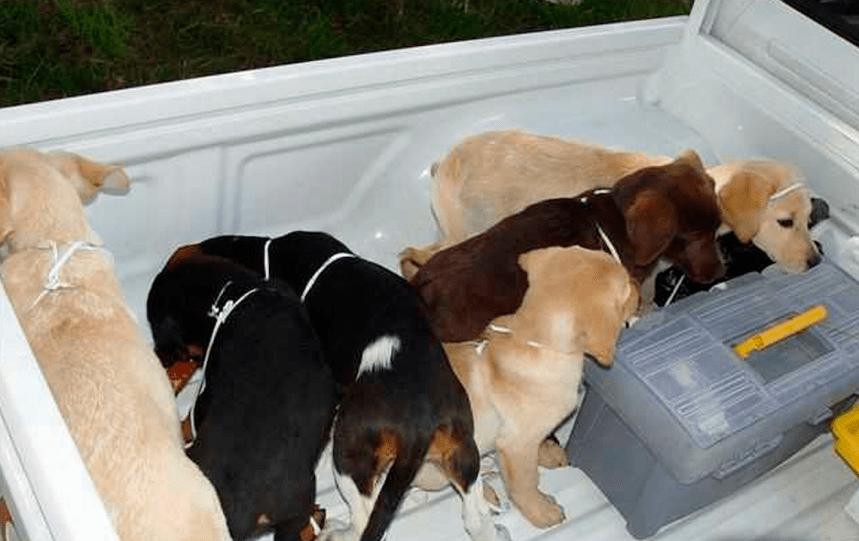 Six ans de prison pour un vétérinaire qui cousait des sacs d'héroïne dans des chiots
