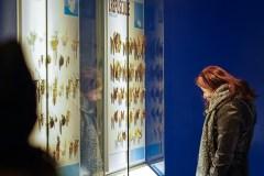 Le nouvel Insectarium sortira de son cocon en 2021
