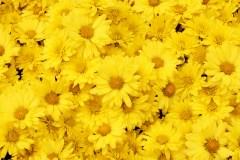 Trois façons de porter du jaune pour en mettre plein la vue cet été