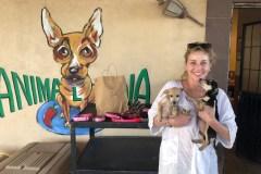 La clinique vétérinaire de L'Île-des-Soeurs a participé à un voyage humanitaire