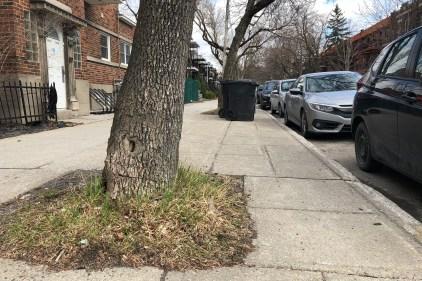Davantage de place pour les arbres de Rosemont