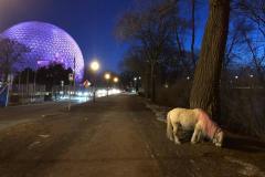 Montréal: cheval miniature en liberté aperçu cette semaine à l'île Sainte-Hélène