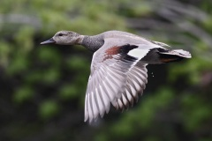Les oiseaux migrateurs sont de retour pour le beau temps