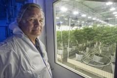 Cannabis: les entrepreneurs autochtones font face à des obstacles particuliers