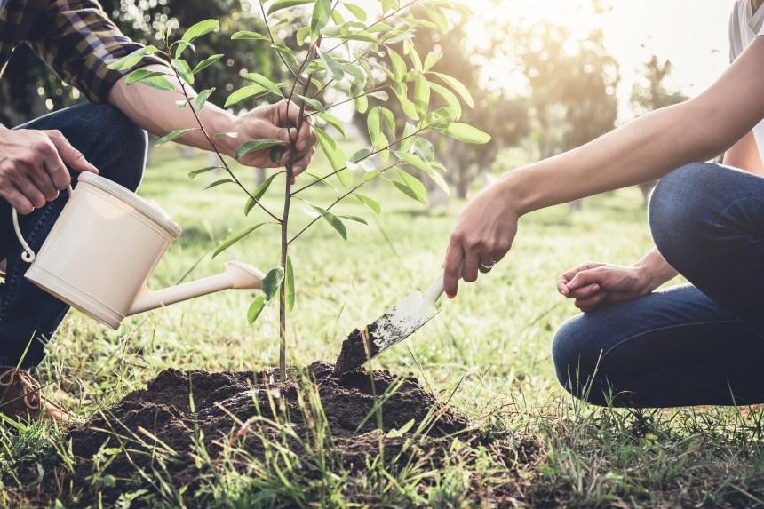 L'Ontario annule un programme visant à planter 50 millions d'arbres