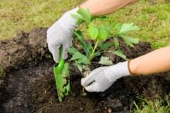 S'initier à l'agriculture urbaine dans l'arrondissement de Lachine