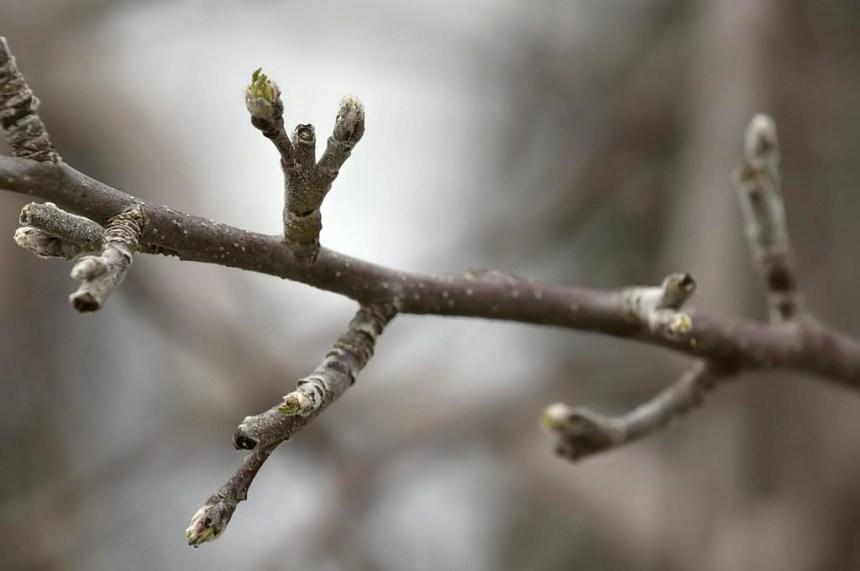 Changement climatique: la génétique pour prédire quels arbres résisteront mieux