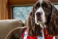 Murphy a calmé le stress et l'inconfort des patients à l'urgence