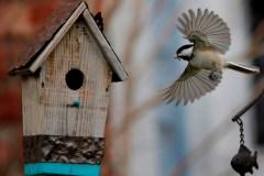 Les oiseaux auraient des personnalités distinctes, selon une recherche