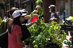 L'agriculture urbaine s'invite à Saint-Laurent
