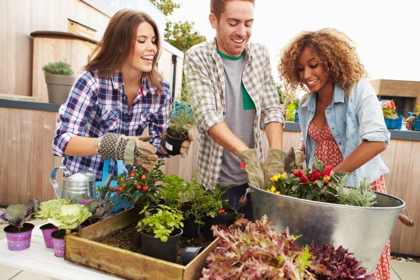 Les bienfaits du jardinage en groupe