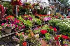 30 ans de couleurs pour Lory Fleurs
