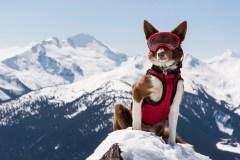Super chiens 3D: «ce sont de véritables superhéros»