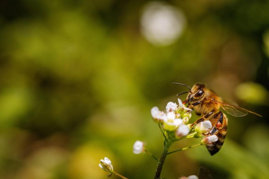 Le printemps de la biodiversité: s'informer pour être de vrais alliés