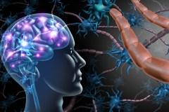 Sclérose en plaques: éclairage sur les «troubles invisibles»