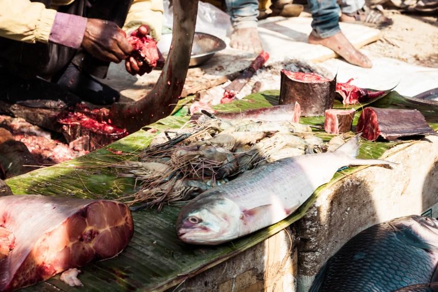 Ottawa présente un nouveau plan pour protéger les populations de saumon sauvage