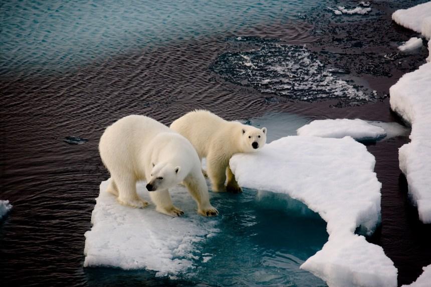 Climat: 80 pays prêts à faire des nouveaux efforts
