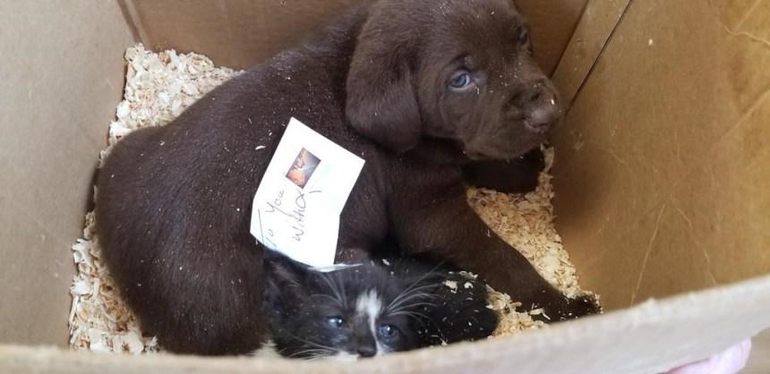 Un chiot et un chaton presque envoyés par la poste en Alberta