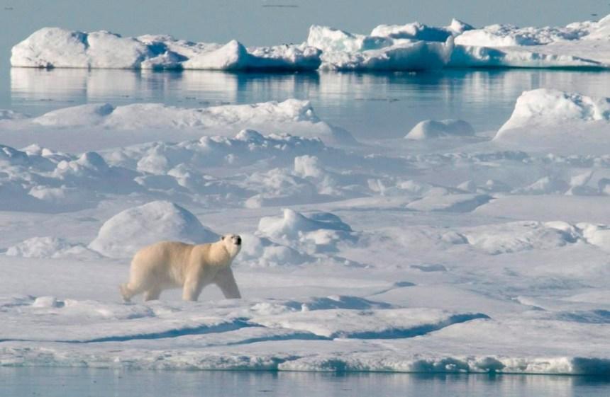 Le Sénat invite le gouvernement à s'intéresser à l'Arctique