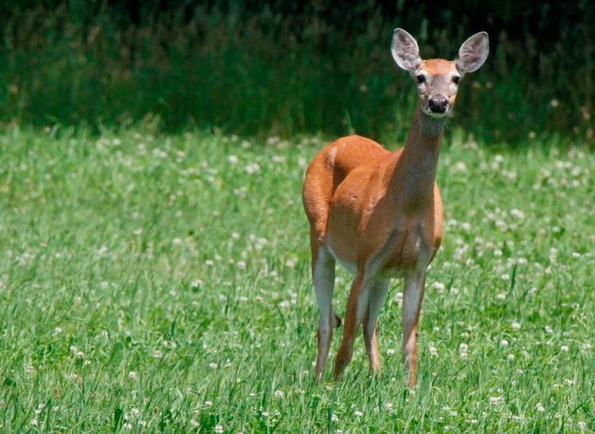 La chasse encore très populaire au Québec avec un demi-million d'adeptes.
