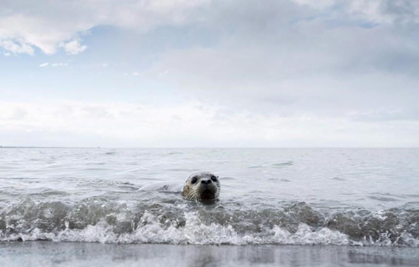 Le Canada doit en faire davantage pour protéger ses océans, selon un rapport