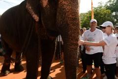 Une première procédure judiciaire pour trafic d'éléphants au Sri Lanka