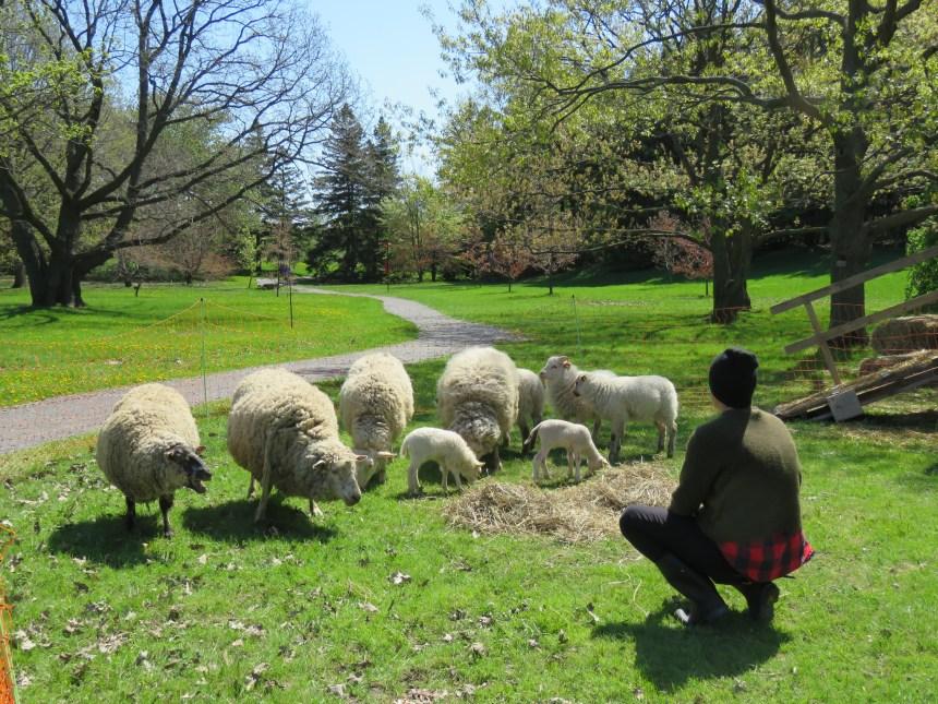La ferme arrive dans les parcs de Rosemont