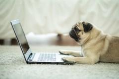 Google donne vie à des animaux en réalité augmentée lors de recherches