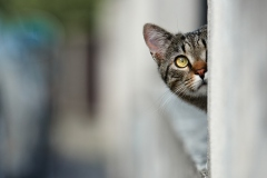 États-Unis: quand des chats montent la garde