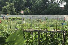 Tous les jardins communautaires de Montréal ouvriront d'ici le 18 mai