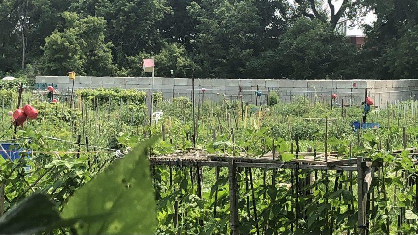 Jardins communautaires: de longues listes d'attente