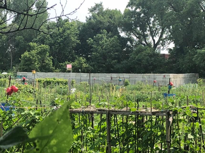 Du béton dans un jardin communautaire dérange