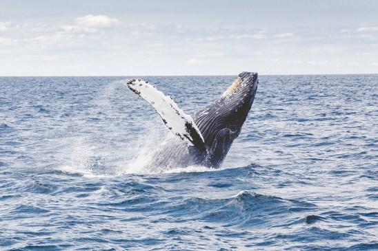 La route des baleines
