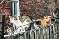 Des chats blessés par un tireur dans le Plateau-Mont-Royal