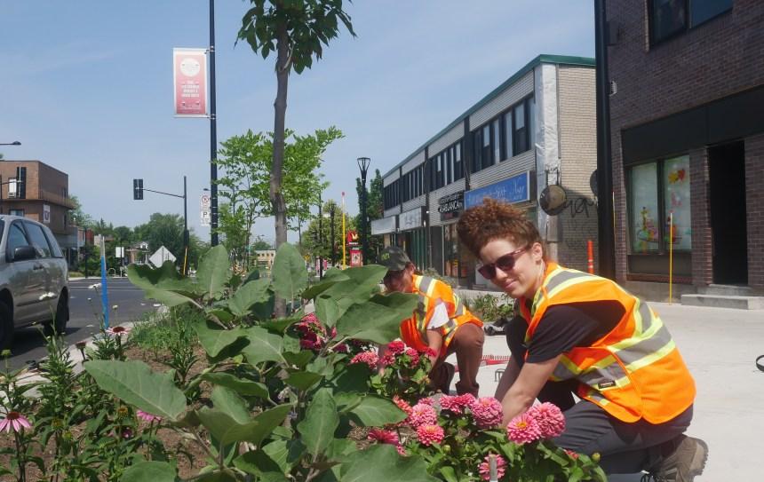 Des végétaux pour nourrir les arbres de rues